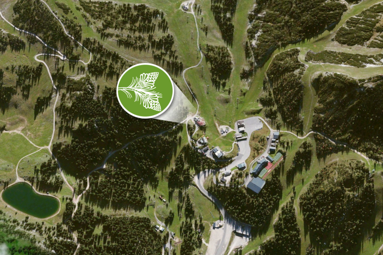 Latschen-Alm - Sonnige Lage mitten im Skigebiet